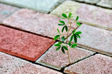 plant-breaking-through-bricks